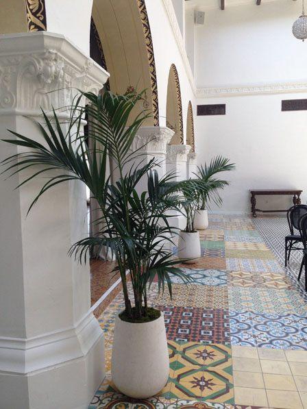commercial property interior plants, plantcare experts, Growing Roots, San Diego, Long Beach, La Jolla