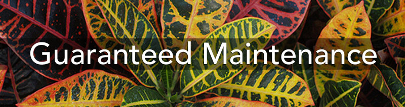 guaranteed plant care maintenance, office plants, commercial, residential