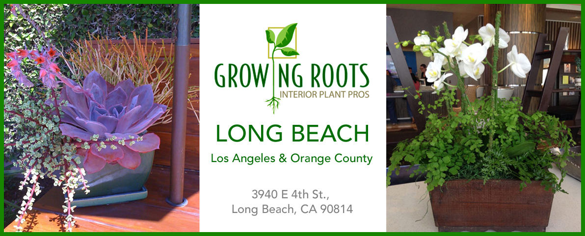 Container Gardens, Commercial Plantscapes, Interior Plant Care Services,