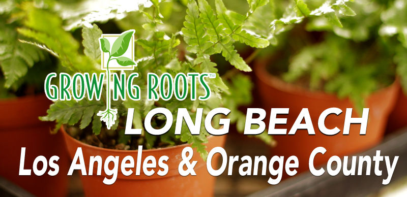 indoor plant care services, Long Beach, Los Angeles, Orange County