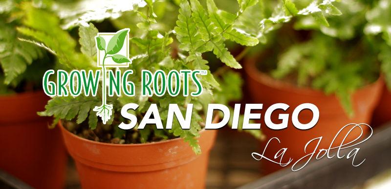 indoor plant specialist, La Jolla, San Diego