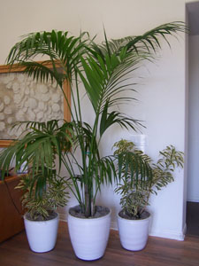 office plants, hotel lobby decor