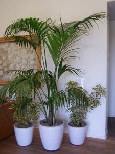 office plants, hotel lobby decor