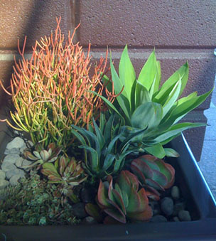 plants for patios and shaded areas