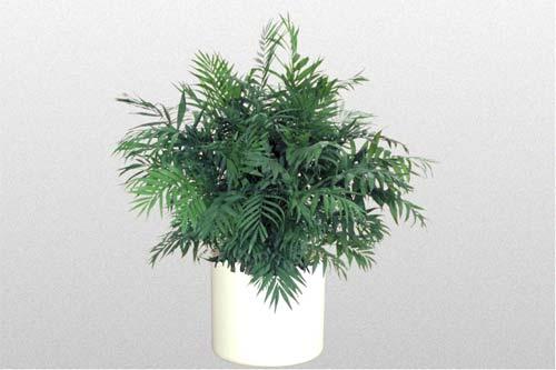 Palm Parlor