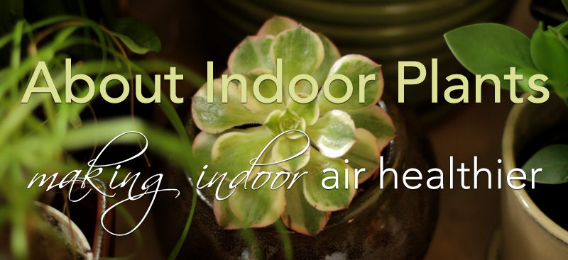 about indoor plants, healthier air, environment