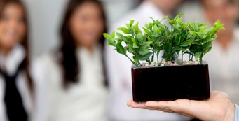 Plants boost office productivity by 15 percent!