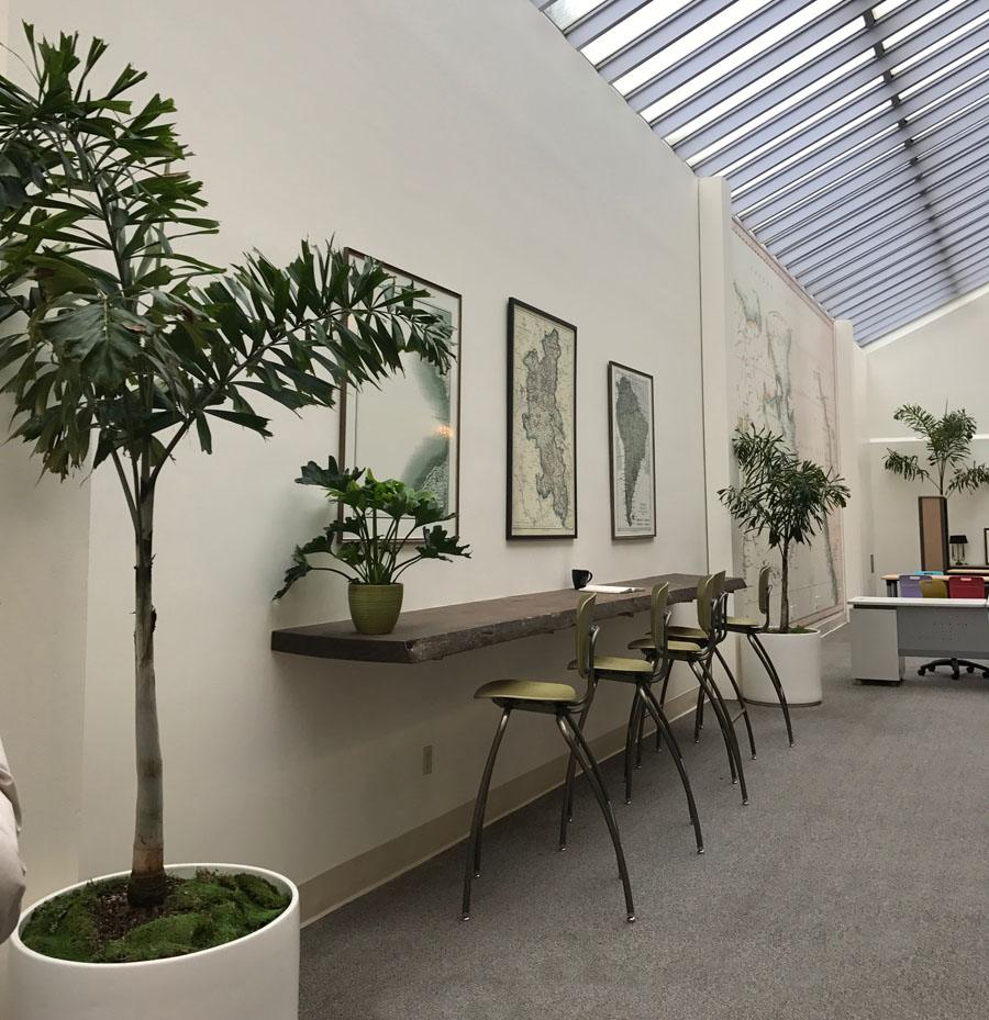 plants for clean air, office plants