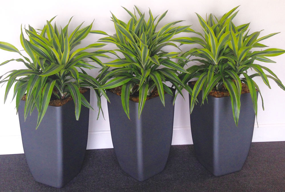eco-friendly plant containers